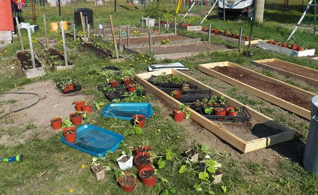 Lets Get Gardening